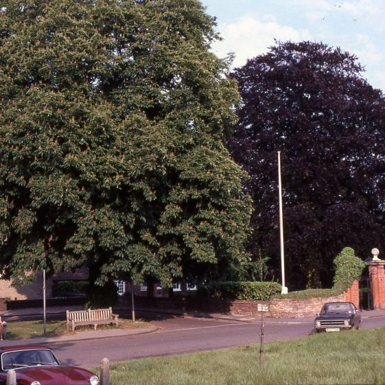 Chestnut in front of the Public Halls and copper beech in front of Harpenden Hall - 5/6/1980   Cat no LHS 0010