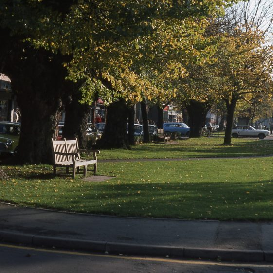 5 old elms in Lower High Street looking south - Nov 1977   Cat no LHS 0012