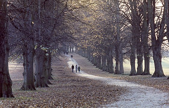 Rothamsted Park