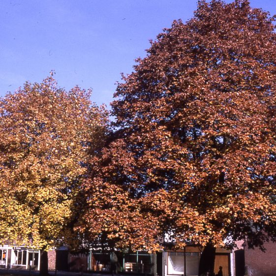 Maples on Leyton Green - 17/10/1970   Cat no LHS 0026