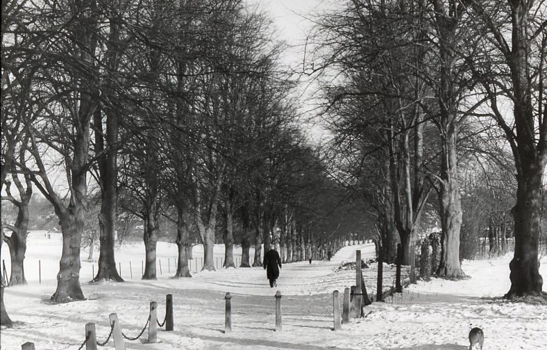 Rothamsted Park, Lime Avenue, in the great freeze, 19 January 1963 | LHS collection