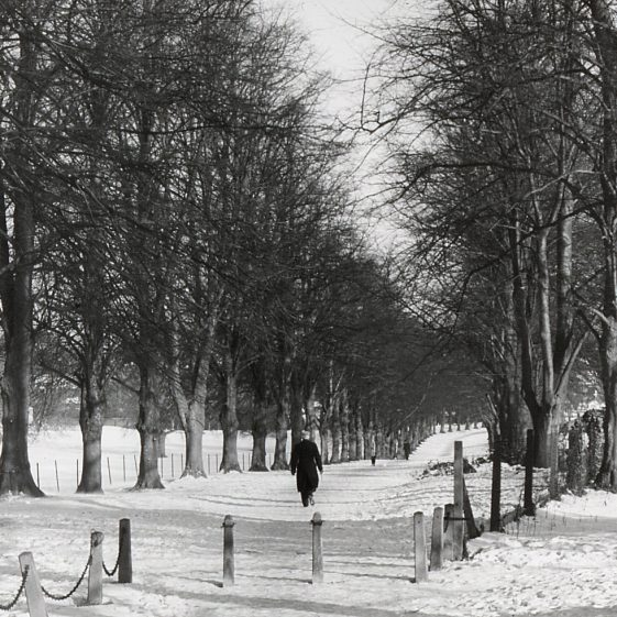 Lime Avenue, Rothamsted Park in the great freeze -19/1/1963   Cat no LHS 0030