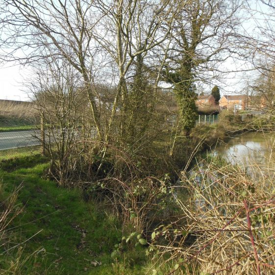 26. Southern end of pond at Farley Green: road past Stockwood Park Golf Course to Newlands on the left | Rosemary Ross, March 2014