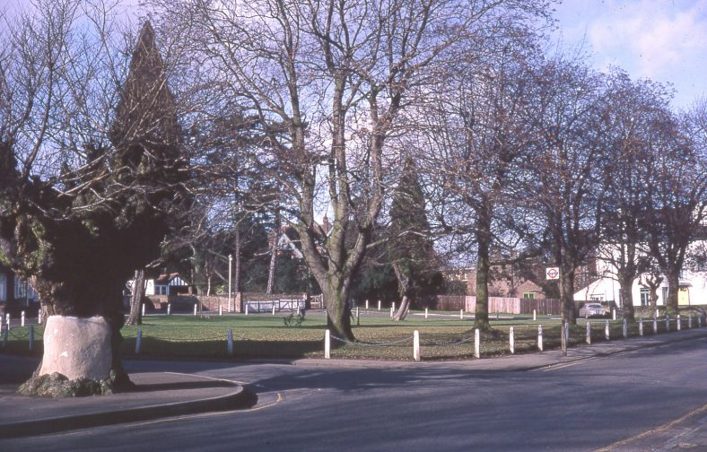 Elm on life-support, corner of Amenbury Lane and Leyton Green, 1970 | Peter Boden