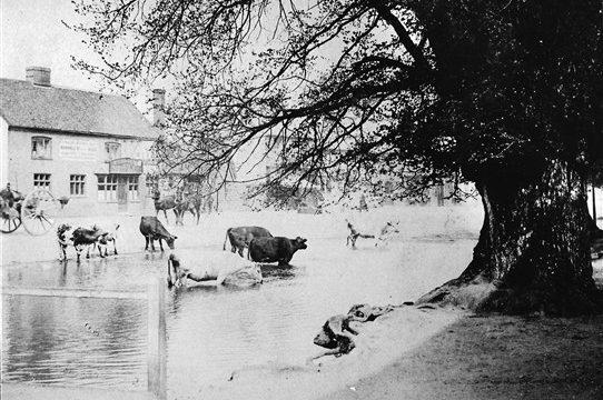 Ponds in Harpenden