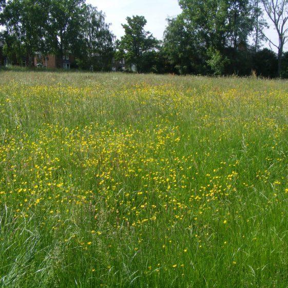 Batford Springs - hay meadow   Ian Denholm