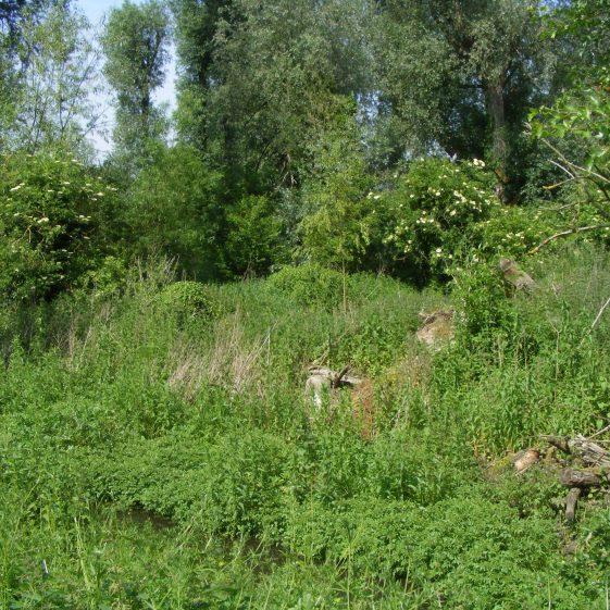 Batford Springs - Wet woodland   Ian Denholm