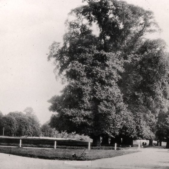 Leyton Road elms and common looking south - 1900   Cat no Slides B 1.58
