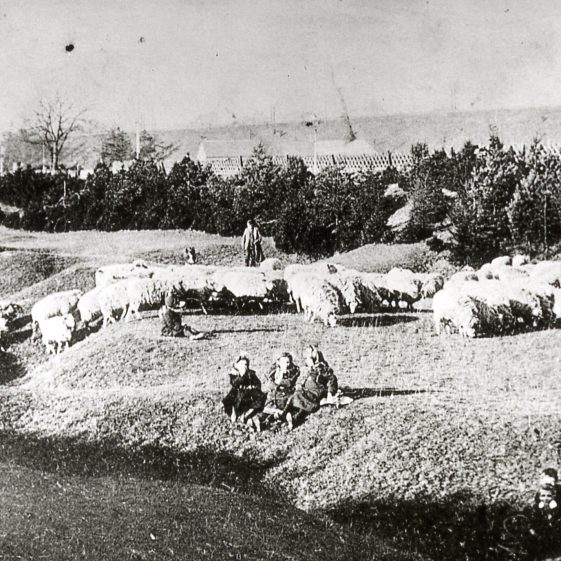 Sheep and children in the Dells on the Common - 1910 | Cat no Slides B 2.21