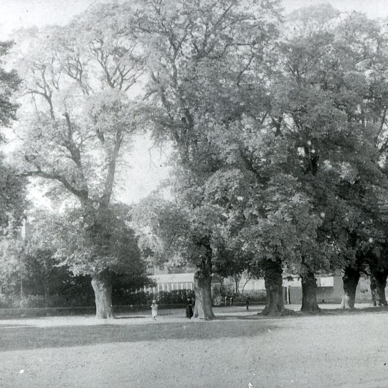 Old elm trees in front of Bennetts, Leyton Road looking NW - 1900   Cat no Slides B 2.32