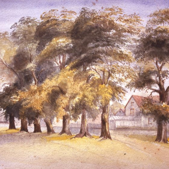Elms outside Bennetts (Royal British Legion), Leyton Road; sketch by unknown artist | LHS archives, cat.no. B 2.33