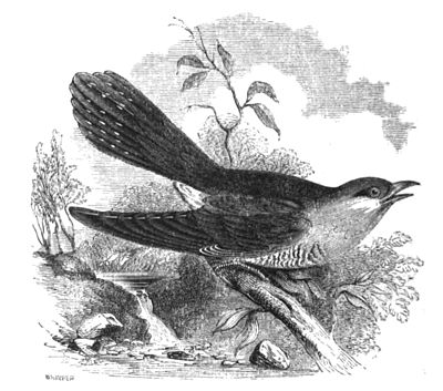 Richard  Lydekker and the First Cuckoo