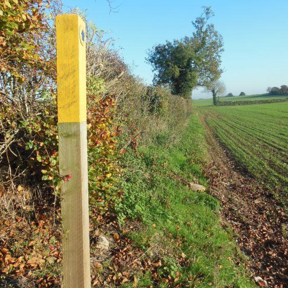 18. Badgerdell Wood on the left - looking SE towards Farley Green | R Ross, October 2015