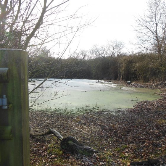 7. The pool at the eastern end of Grove Spring, supplying the farm, which lies behind the photographer | R Ross, Jan 2015