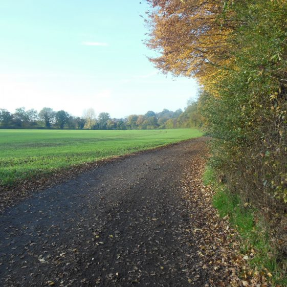 82. The track from Pipers Lane to Westend farm, looking WNW towards Cross Farm and Grove Road | R Ross, October 2015
