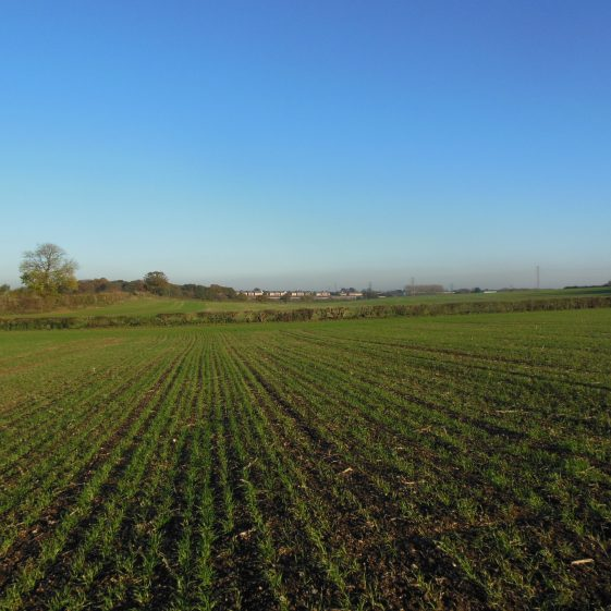 20. View across to Farley Green - the 'valley' runs along the further hedgerow | R Ross, October 2015