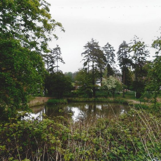 70. The second pond, viewed from the Common towards Southdown Road and pines planted by Mr H Tylston Hodgson | LHS archives - L Casey