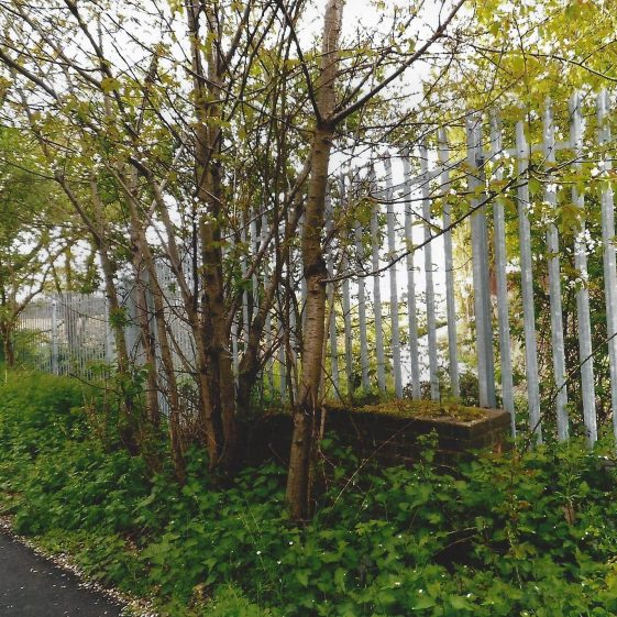 113. At Grid ref. 196072 the drainage channel along the west side of Smallford nurseries passes under the railway/Alban Way and continues towards the River Colne. | L F Casey, 2014