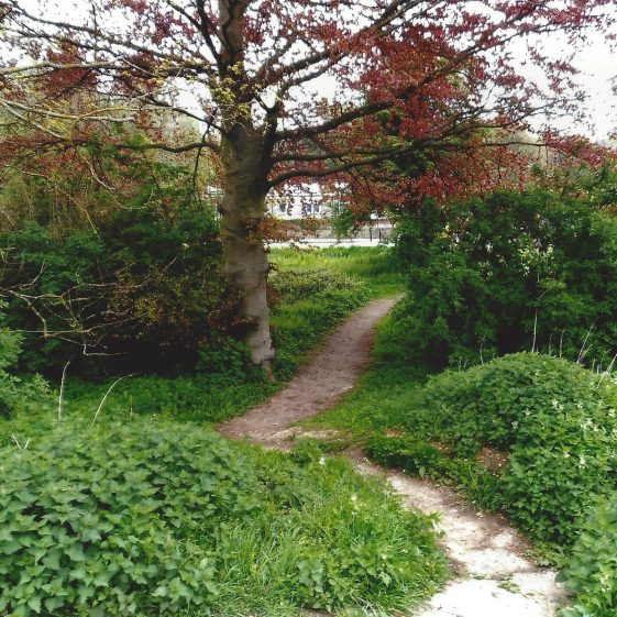 69. Path from the Common to Southdown Road at north end of first pond - dipping down to the floor of the valley | LHS archives - L Casey
