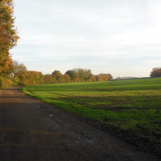 83. The track looking towards Westend Farm. | R Ross, October 2015
