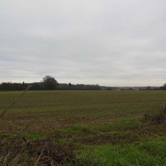 13. Looking east from the field just south of Caddington Golf Course; the lakes lie the valley behind the hedge on the left of the photo. Badgerdell Wood and Farley Green are on the horizon. | Rosemary Ross, 22 November 2015