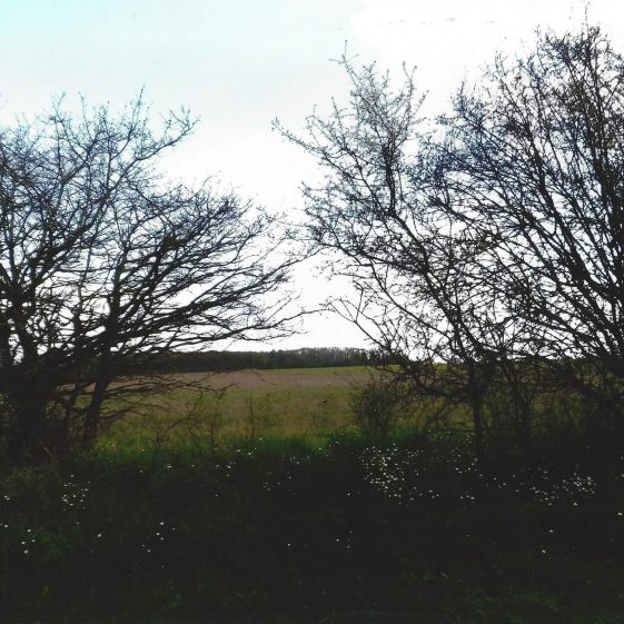 100. On the South-East side of Coleman Green Lane the land rises to woodland south of Hammonds End Farm at Grid ref. 177114 | L F Casey, 2014