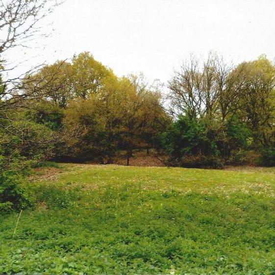 88. Nomansland Common: depression running alongside Ferrers Lane | LHS archives - L Casey, Aug 2014
