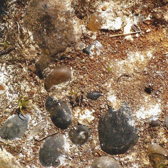 95. Exposed gravel on Nomansland Common. | LHS archives - L Casey, Aug 2014, LH 14159