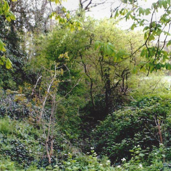 114. Drainage channel alongside Smallford nurseries near the bridge under the Alban Way. | L F Casey, 2014