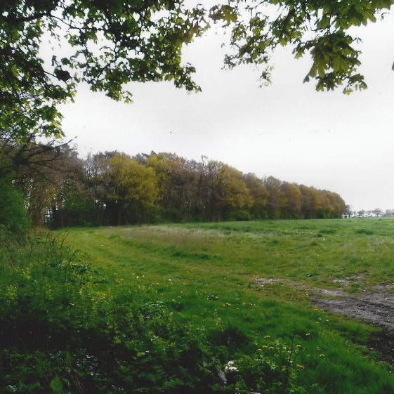 109. From Oaklands Lane at Grid ref. 191079 a belt of trees runs down to Hatfield Road, alongside the nurseries at Smallford. | L F Casey, 2014