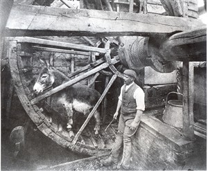 Annables Donkey Wheel
