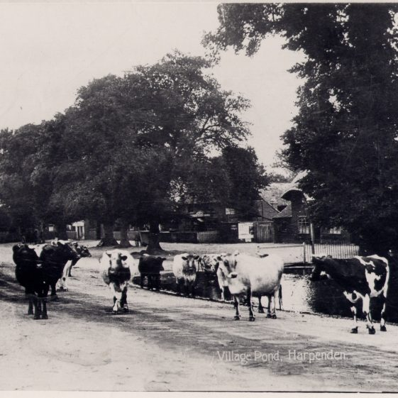 Cows by the Cock Pond - maybe from Church Farm? | LHS collection, LHS 000097