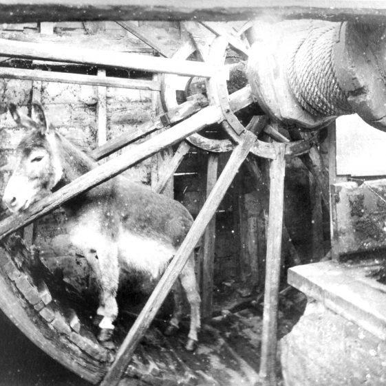 11. Donkey Wheel at Annables Farm - donkey named Dink | Cat no HC 168  - copy from photo by F.Thurston