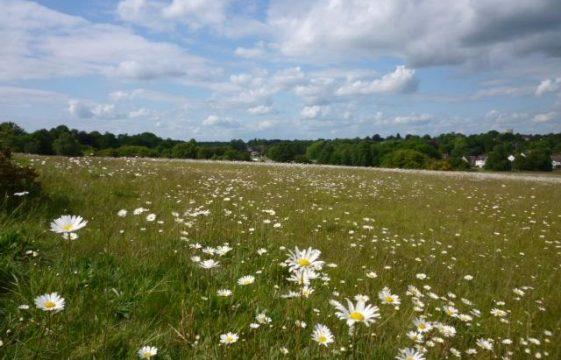 Managing Harpenden Common