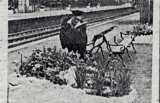 Prize for Harpenden Station gardens, 1949
