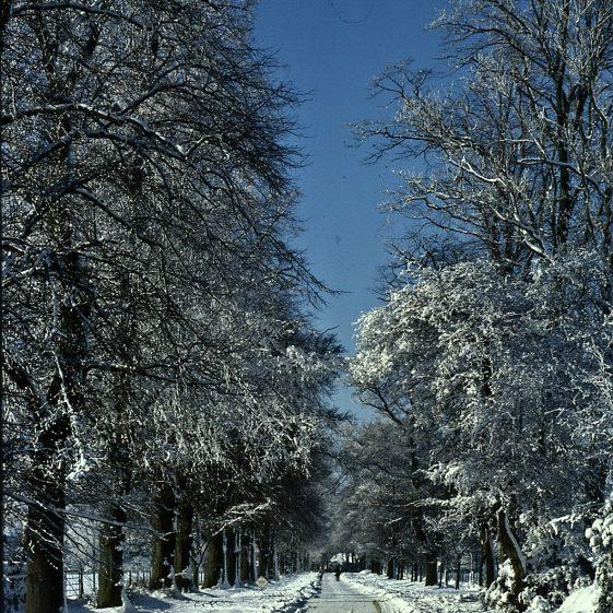 Winter in Rothamsted Park, December 1981   LHS archives - JJ 113