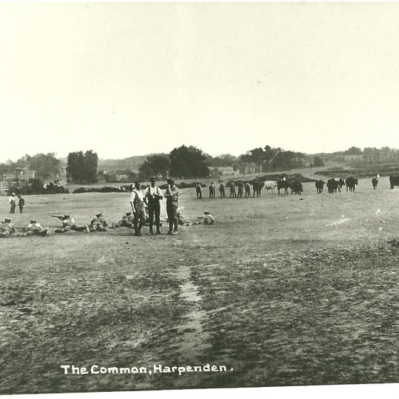 13.  Territorials exercising with Lee-Enfield rifles, Harpenden Common, Aug 1914 - note the cows strolling past! | LHS archives, SF scan 0017