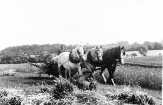 Farming and Conservation at Thrales End - 1907-2007