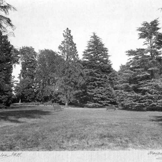 15 Welcombe - gardens, possibly in the SE corner beyond the formal lawns.   LHS archives - Thurston Album 14