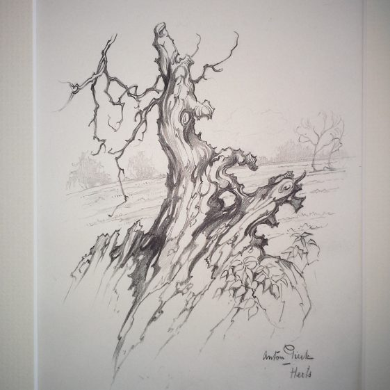 Tree stump, Herts | Anton Pieck - Copyright of the Pieck family