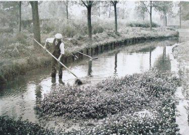 Raking watercress, Castle Farm, River Lea   Geoff Woodward Collection